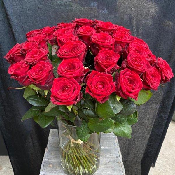 Der Rosen Klassiker Bild 1