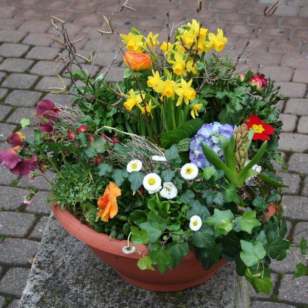 Frühling Bild 1