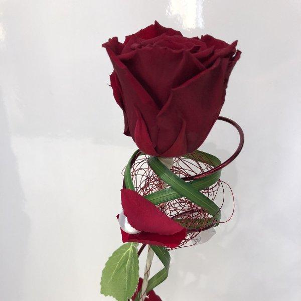 einzelne Longlife Rose Bild 1