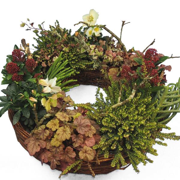 Weidepflanzring winterliche Pflanzenauswahl I Bild 3