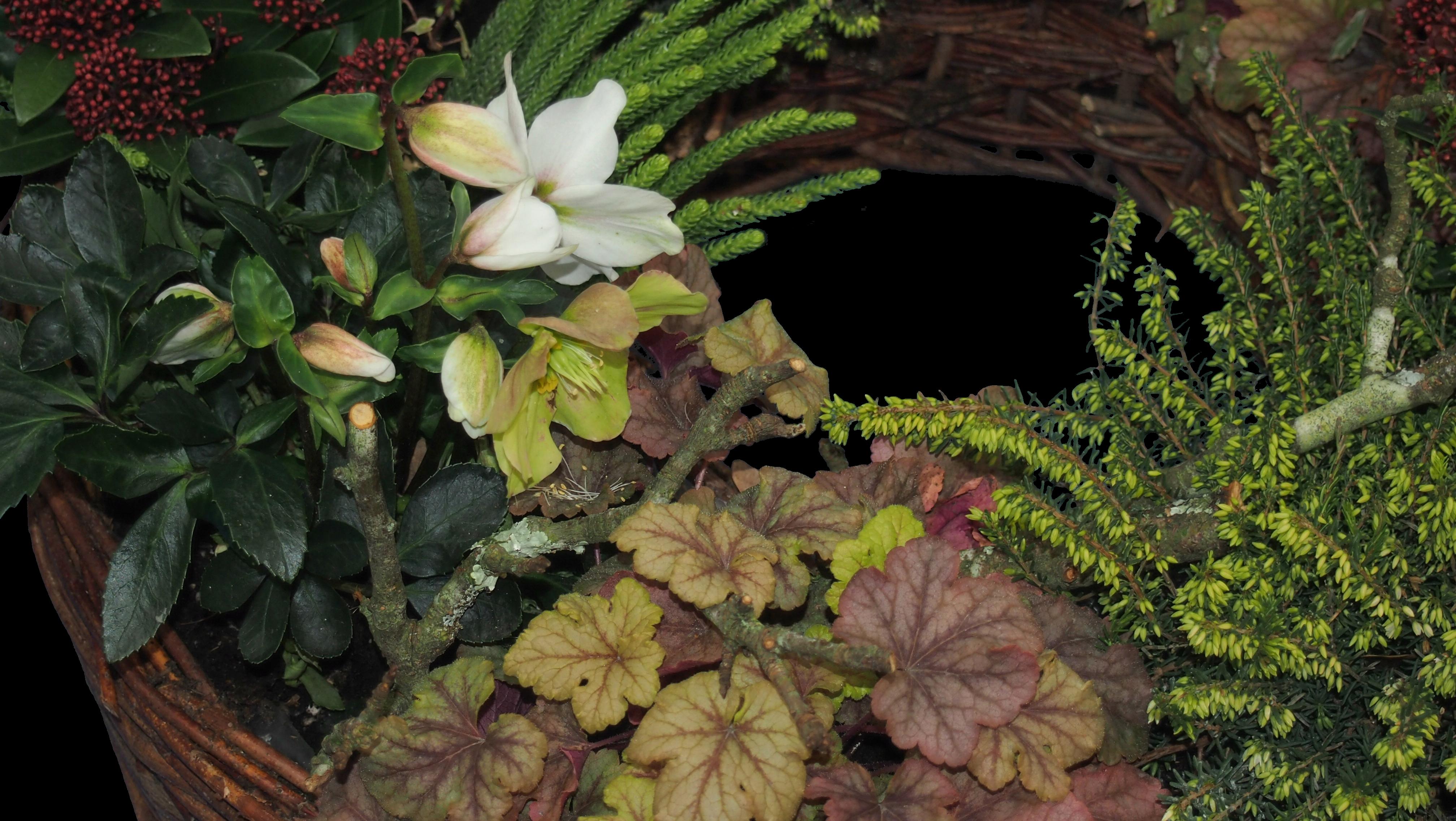 Weidepflanzring winterliche Pflanzenauswahl I Bild 4