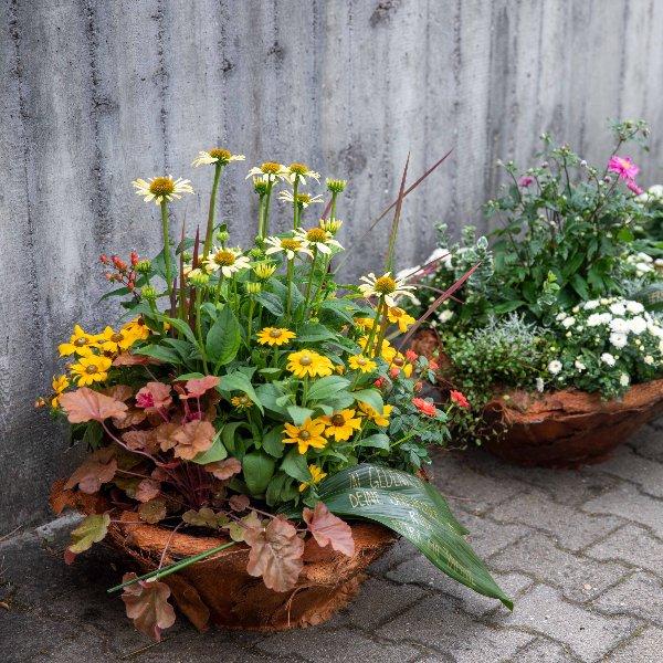 Trauerschalen saisonal bepflanzt Bild 1