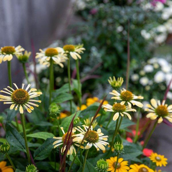 Trauerschalen saisonal bepflanzt Bild 3