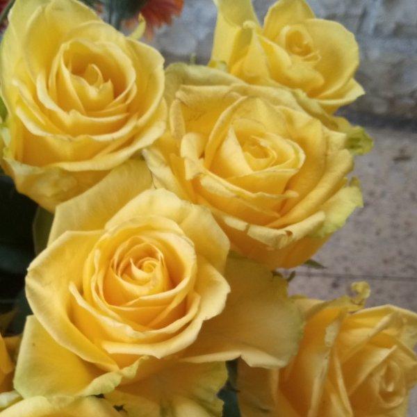 Gelbe Rosen Bild 1