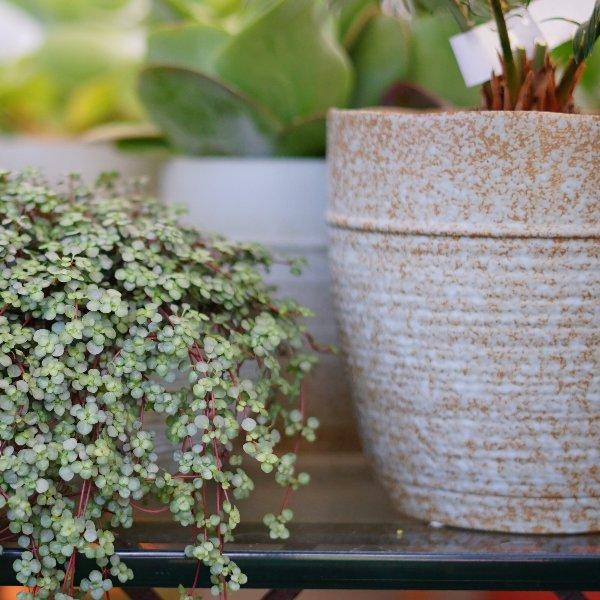 Steinzeug Übertopf braun-beige Bild 2
