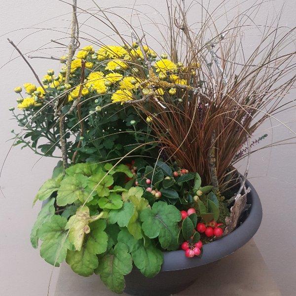 Pflanzschale Chrysantheme Bild 1