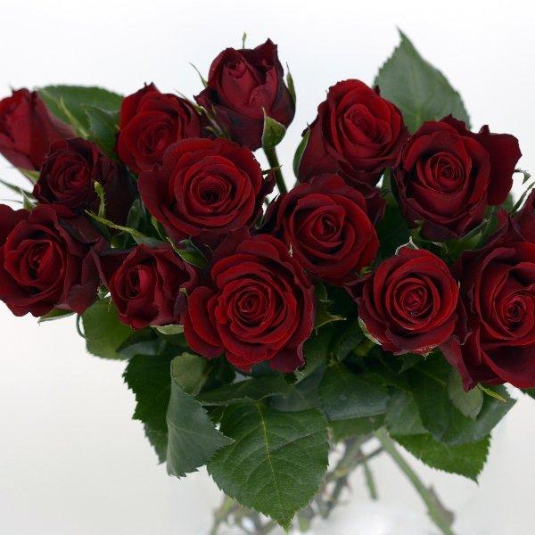 Eine Rose mit grünem Beiwerk Bild 1
