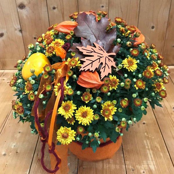 Ausgeschmückte Herbstpflanze Chrysantheme Bild 1