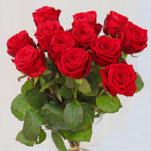Strauß mit roten Rosen, langstielig klassisch ohne Beiwerk Bild 1