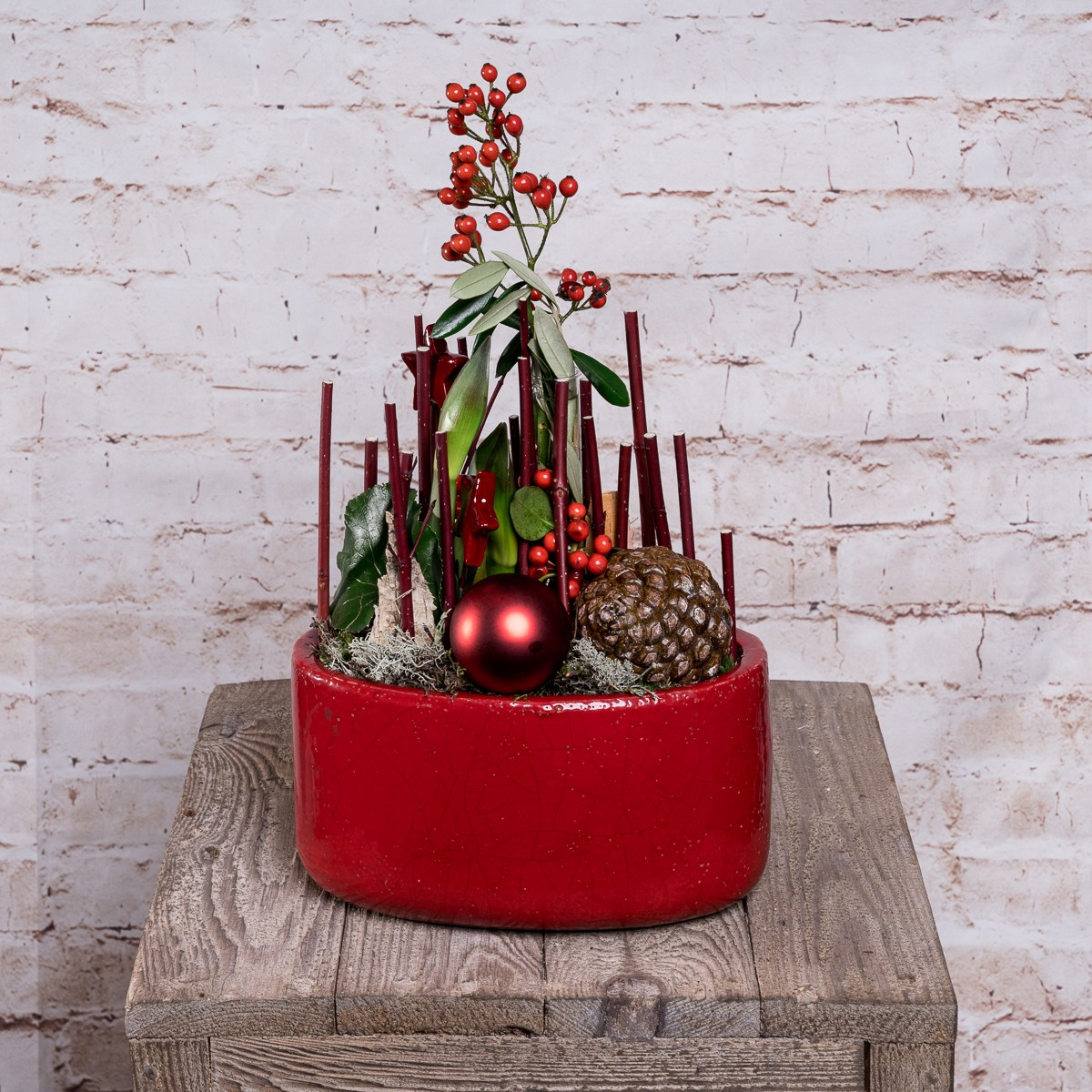 Dekorative Amaryllis im roten Topf Bild 1