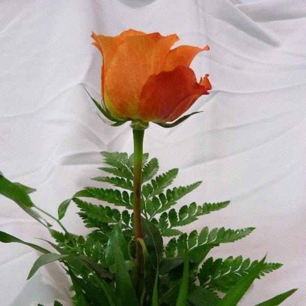 Rose mit Grün Bild 3