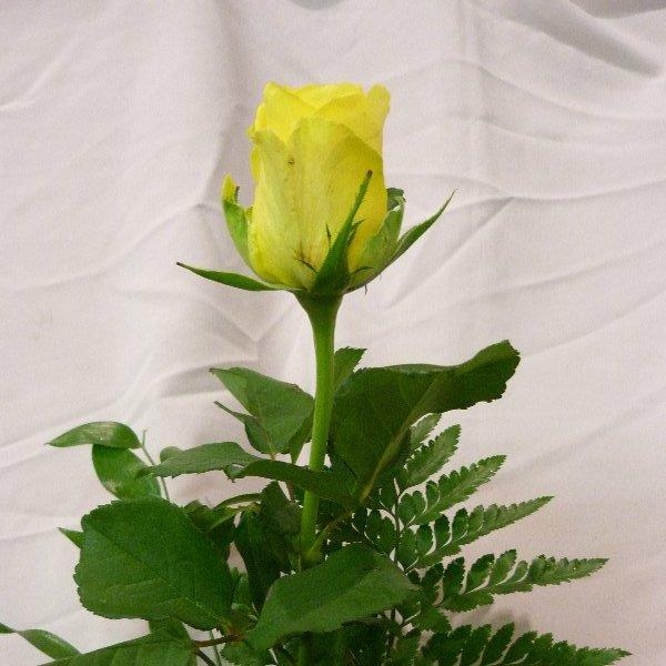 Rose mit Grün Bild 4