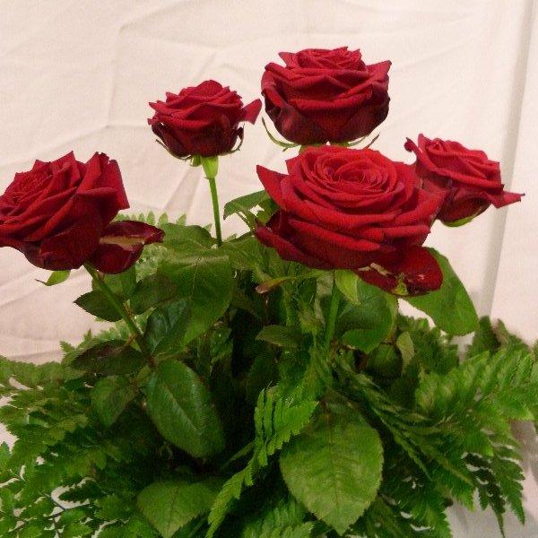 5 Rosen mit grün Bild 1