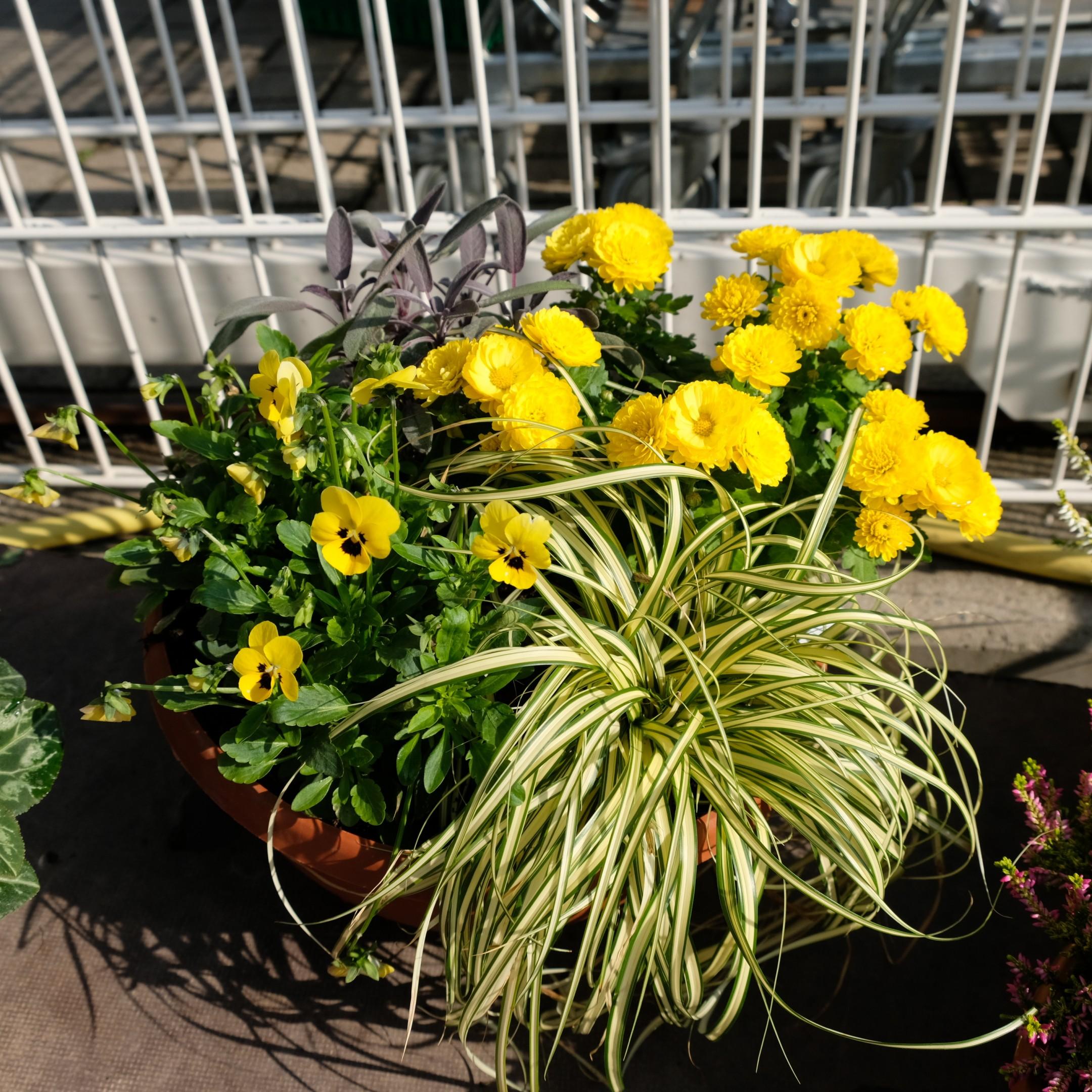 Bepflanzte Schale Bild 1