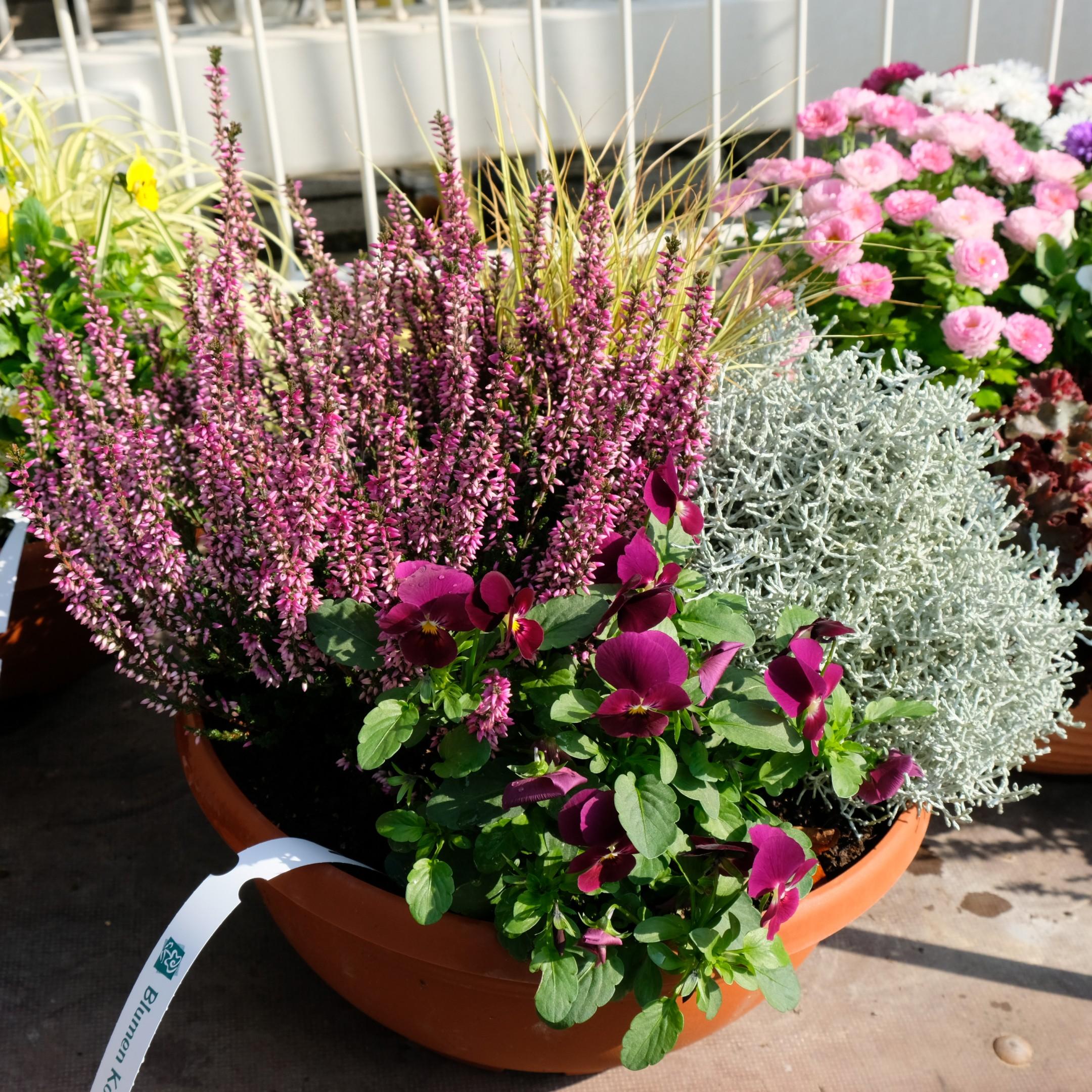 Bepflanzte Schale Bild 3