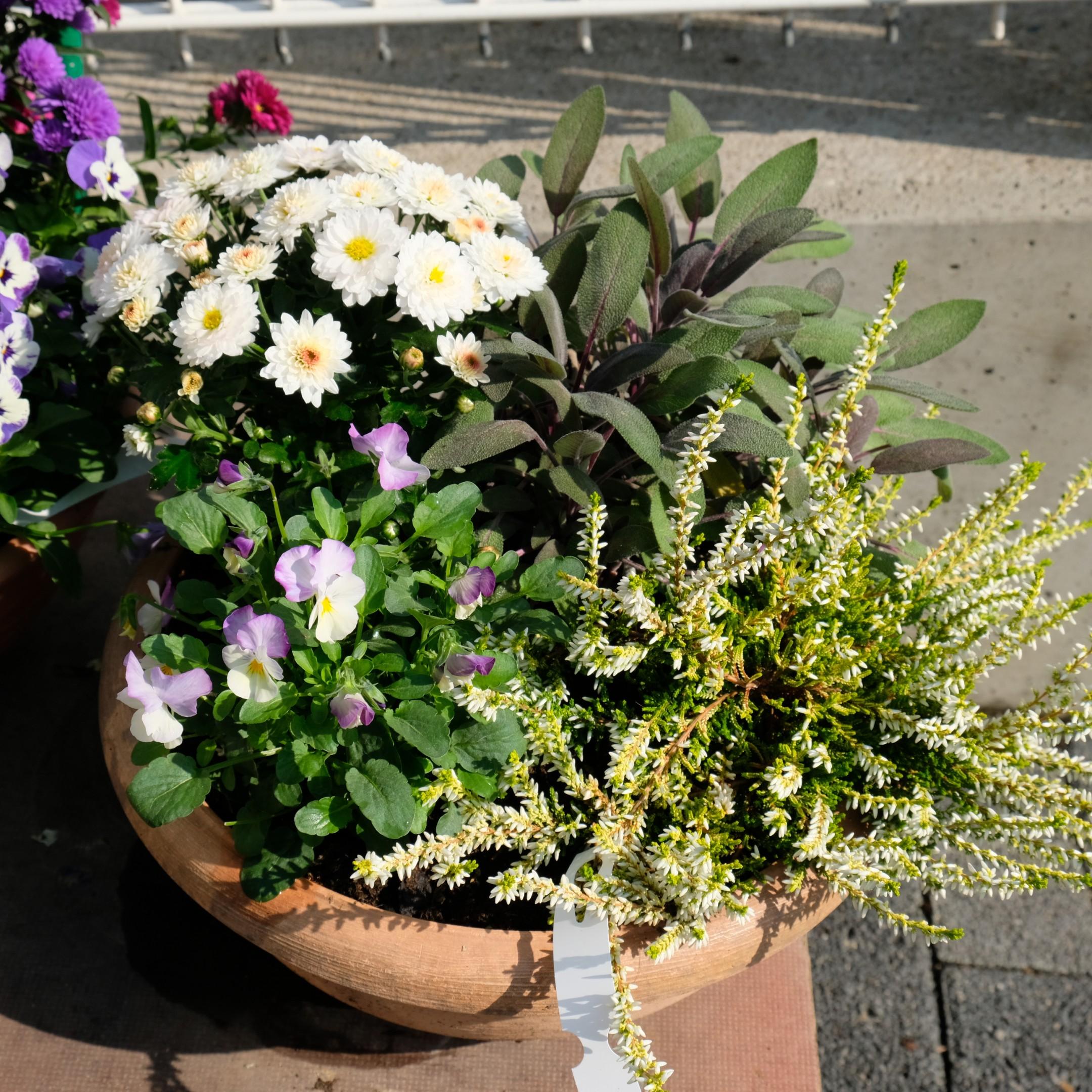 Bepflanzte Schale Bild 4