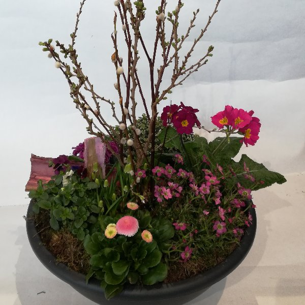Scha 12 bepflanzte Schale  in rosa-pink Bild 1