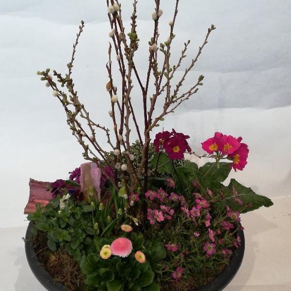 Scha 12 bepflanzte Schale  in rosa-pink Bild 2