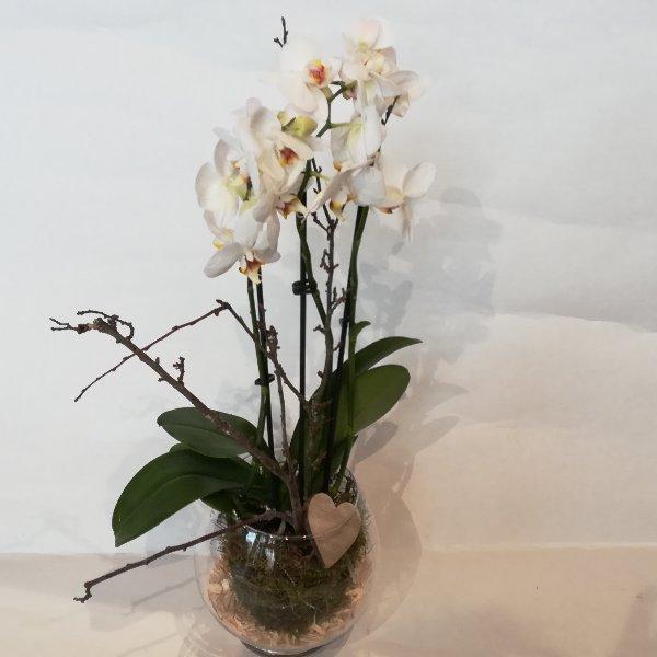 TP 13  Phalaenopsis im Glas Bild 1