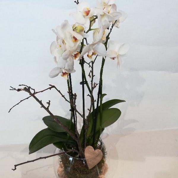 TP 13  Phalaenopsis im Glas Bild 2