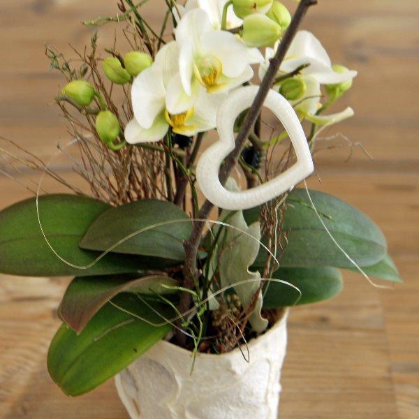Orchideenpflanze geschmückt Bild 1