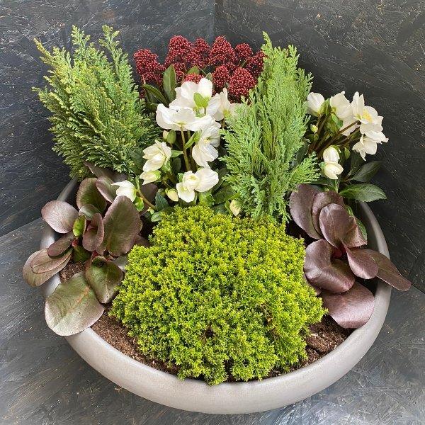 Schale bepflanzt, winterhart Bild 1
