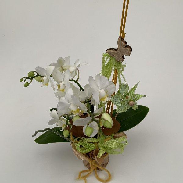 Orchidee, ausgeschmückt, im Manschettentopf Bild 2