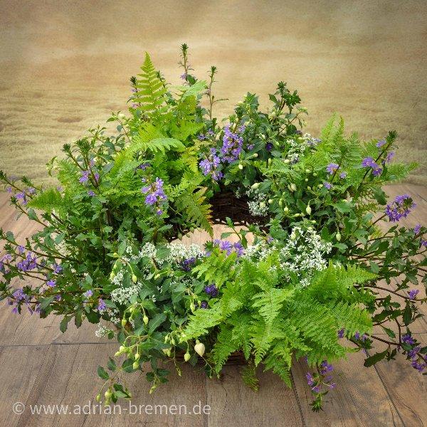 gepflanzter Trauerkranz - wuchshaft/natürlich Bild 1
