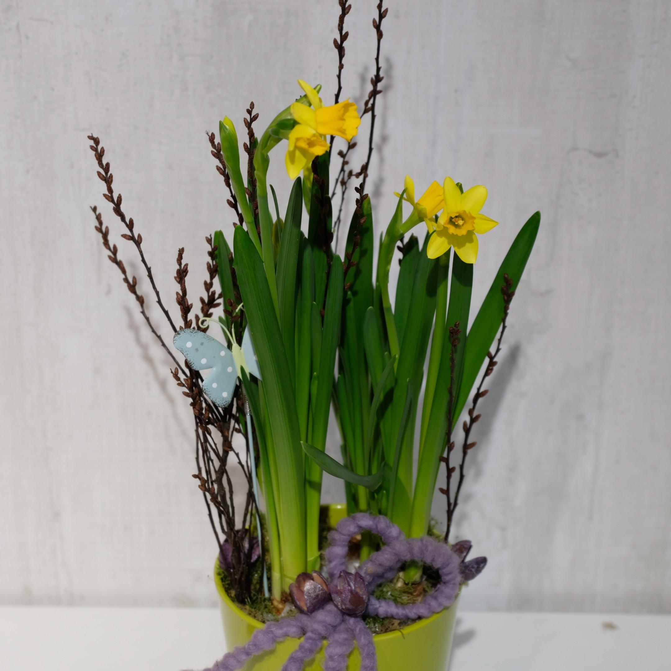 Frühlingserwachen 1 Bild 2