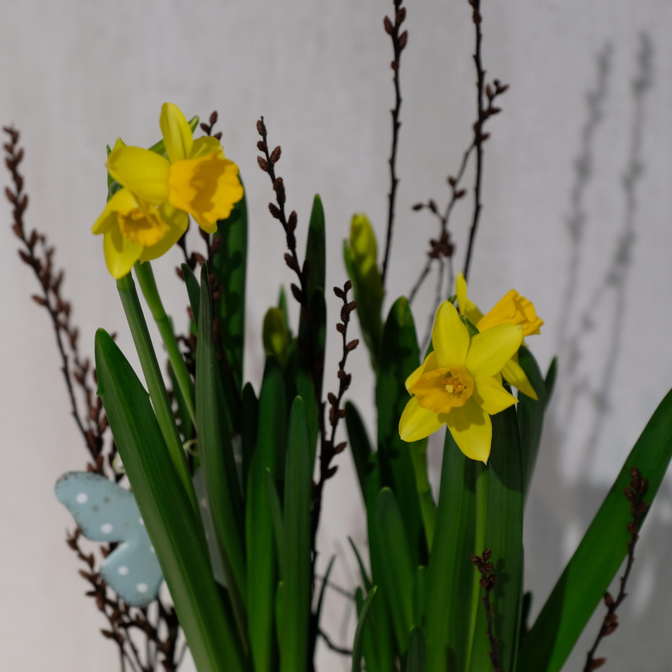 Frühlingserwachen 1 Bild 3
