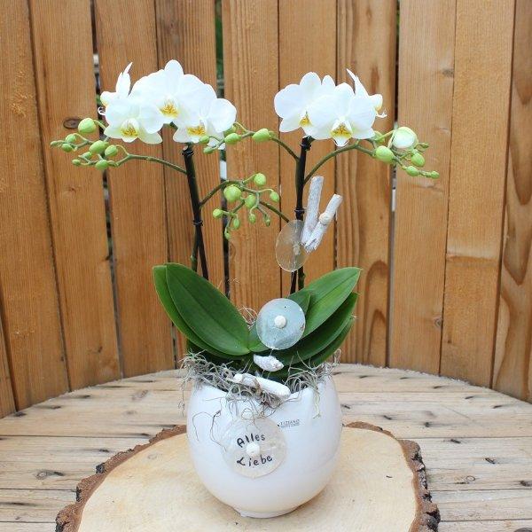 """Phalaenopsis dekoriert """"Alles Liebe"""" Bild 1"""
