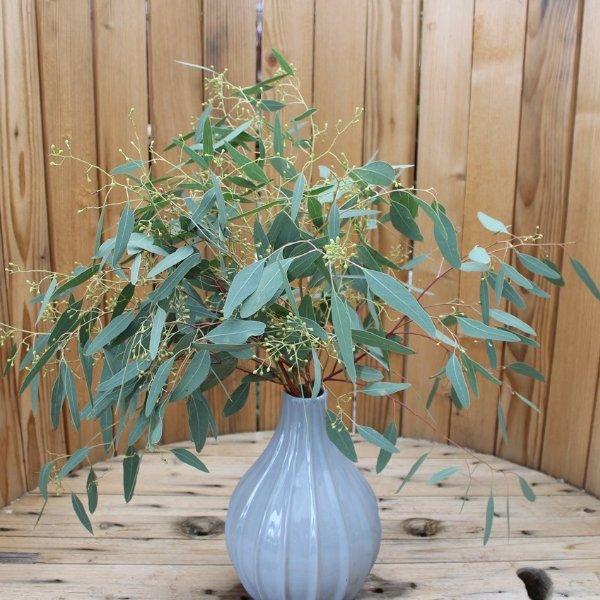 Eukalyptus mit Beeren Stiel Bild 1