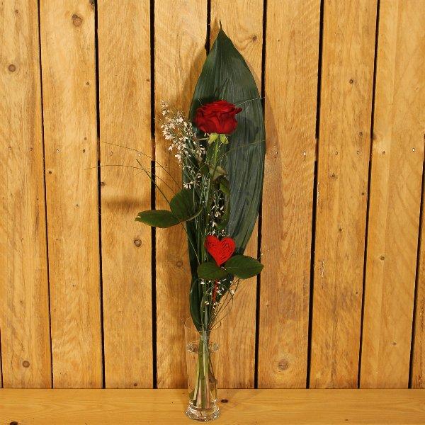 Rote Rose Bild 1