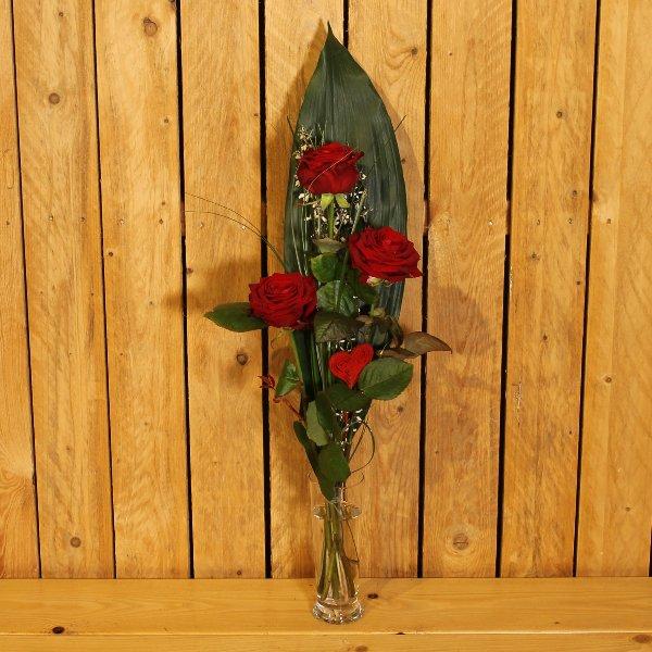 Rote Rose Bild 2