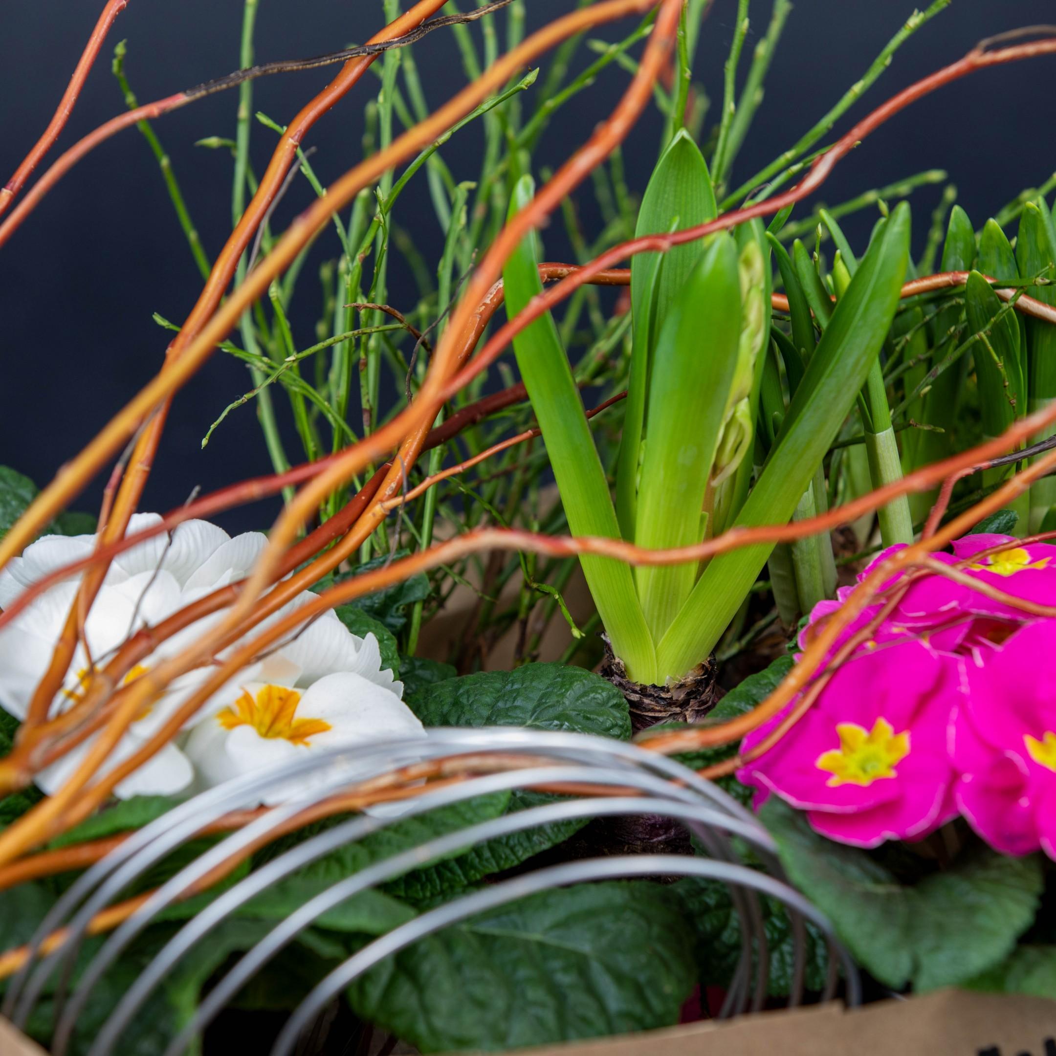 Der Blumenhandwerk Frühling für alle Bild 5