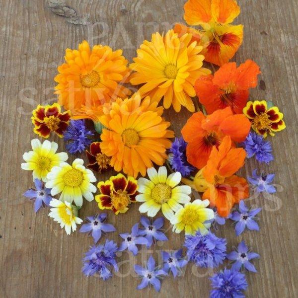 Essbare Blüten Bild 1