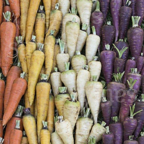 Karotten Mischung Bild 1