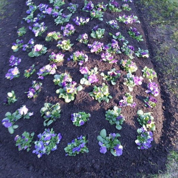 Hügelbepflanzung Frühling Bild 1