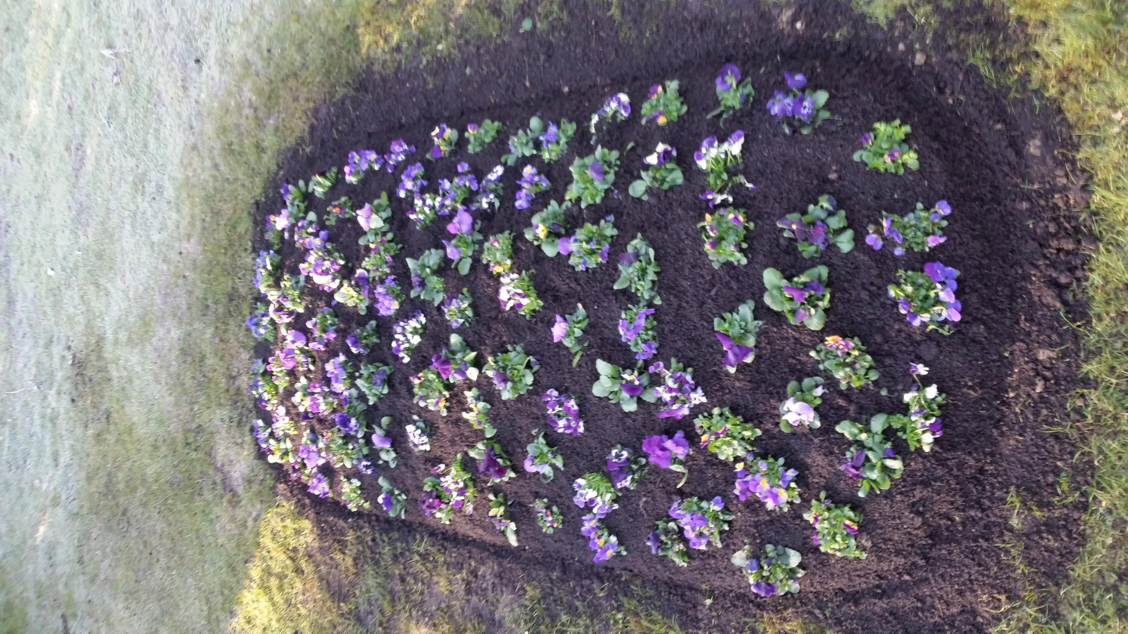 Hügelbepflanzung Frühling Bild 2