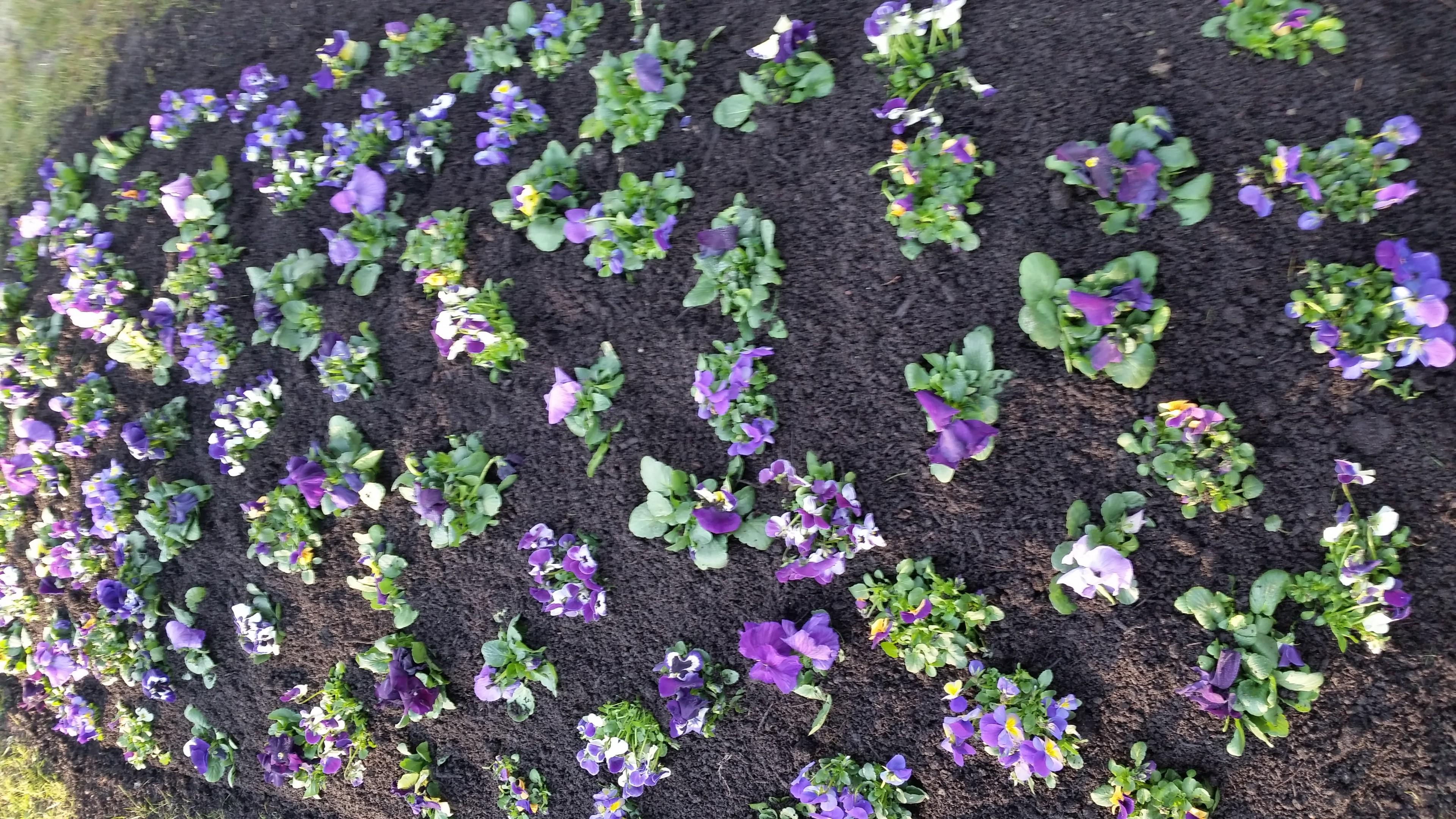Hügelbepflanzung Frühling Bild 3