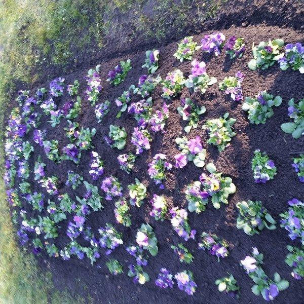 Hügelbepflanzung Frühling Bild 4