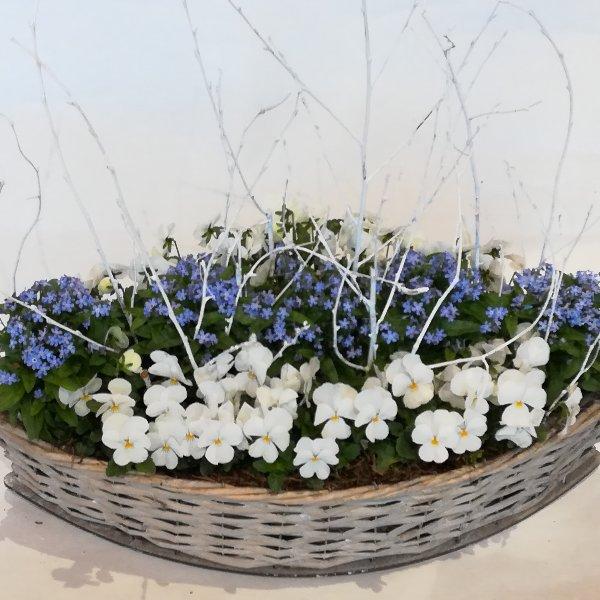 K6   bepflanzter Korb in blau-weiß Bild 1