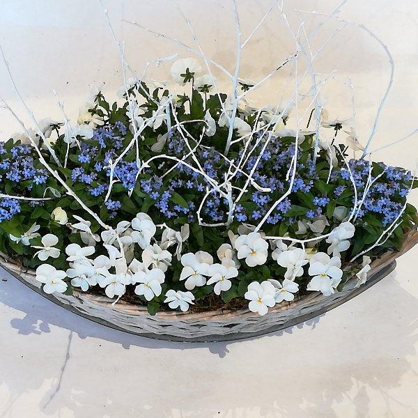K6   bepflanzter Korb in blau-weiß Bild 2