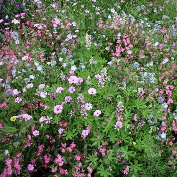 Elfengarten - Blumenmischung Bild 1