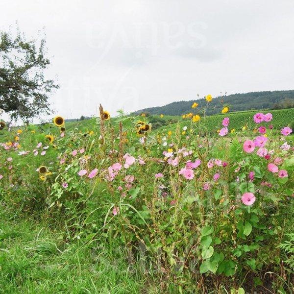 Bauerngarten - Blumenmischung Bild 1