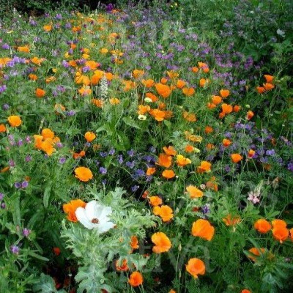 Sommerstrauss - Blumenmischung Bild 1