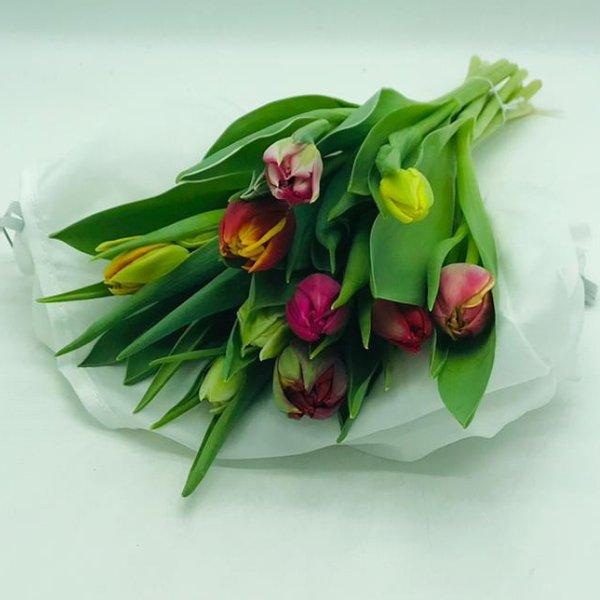 Bund Tulpen Bild 1