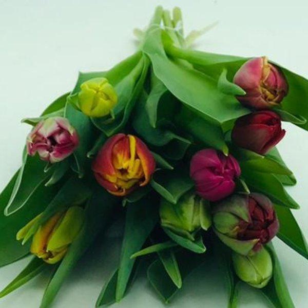 Bund Tulpen Bild 2