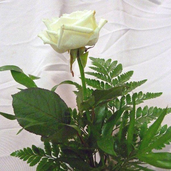 Rose mit Grün Bild 1