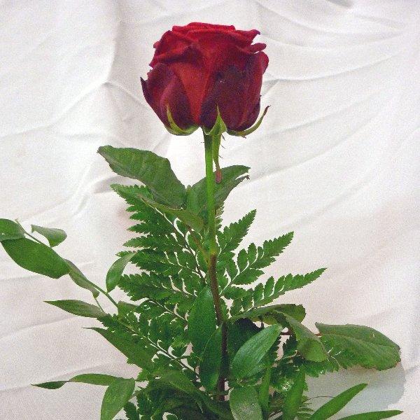 Rose mit Grün Bild 2